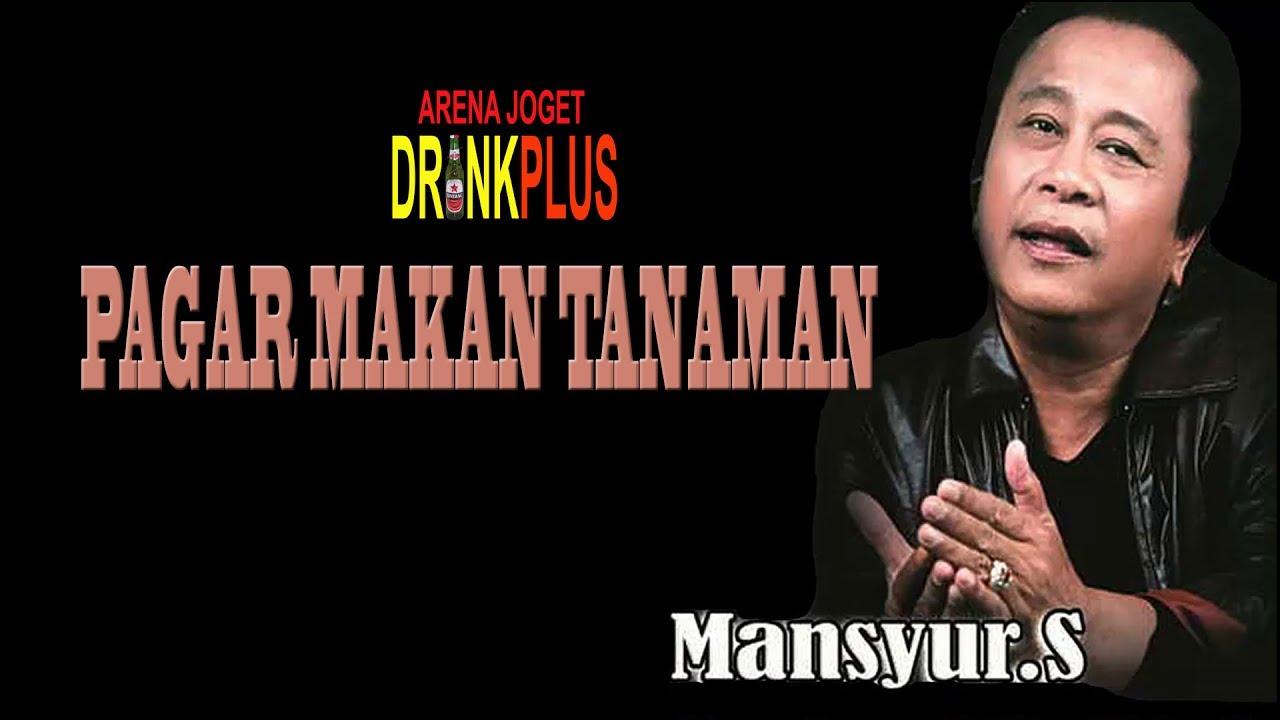 PAGAR MAKAN TANAMAN   MANSYUR S   YouTube
