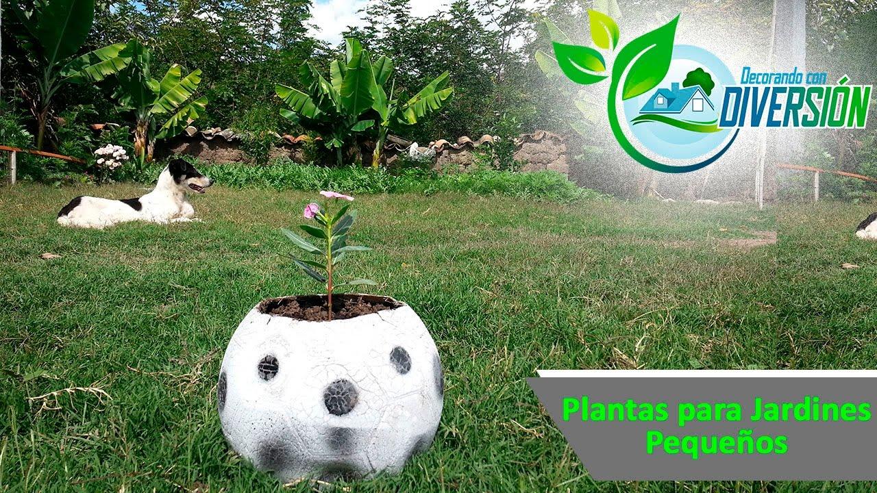 Plantas para jardines peque os como sembrar una for Plantas para estanques pequenos