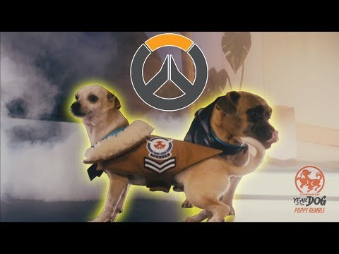 Twitch Chat Reaction to the Overwatch Puppy Rumble - Year of the Dog Event