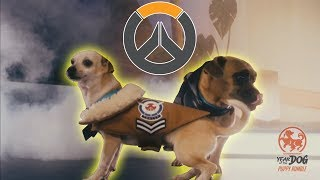 Twitch Chat Reaction to the Overwatch Puppy Rumble - Year of the Dog Event thumbnail