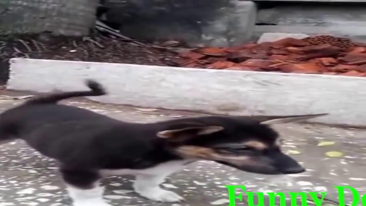 Funny Videos   Animals Mating   Animals mating compilation 2016