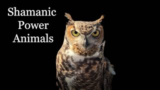 All About Shamanic Power Animals