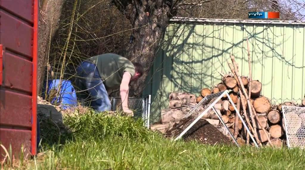 Asseln Im Garten asseln im garten