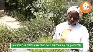 Le Jardin agro-écologique d'Artemisia à Abomey-Calavi-Bénin