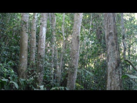 Restauração Florestal - Conservação