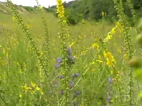 Травы при мочекаменной болезни почек