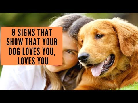 8 Signs That Show That Your Dog Loves You, Loves You