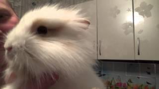 Мы купили кроликов (Помогите придумать имена)