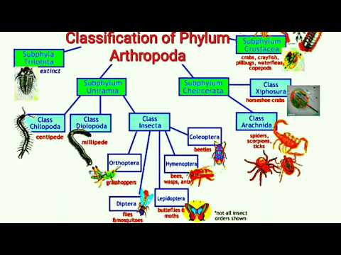 Classification of Phylum Arthropoda