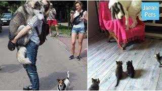 ドラマチックなワンコ達。渾身のびっくりリアクションに思わず笑っちゃう画像9選! - Japan Pets thumbnail