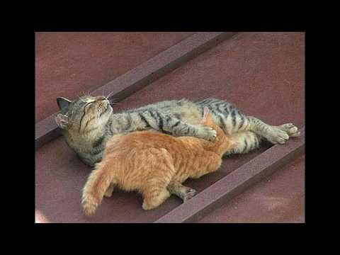 Кошки, прикольные, смешные фото