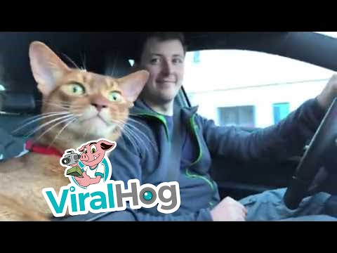 If You're Happy and You Know It, Then Say Meow! || ViralHog