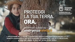 Spot Xylella - Regione Puglia