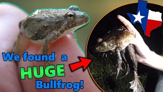 Meet the Frogs of Texas! (they say everything is bigger... they weren't wrong...)