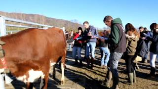 Finale départementale de concours de jugement de bétail à Vovray-en-Bornes