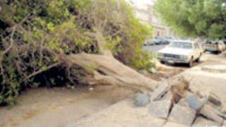 اخطر شجرة عربية Dangerous tree