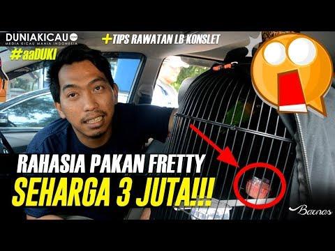 RAHASIA Pakan LB FRETTY Seharga 3JUTA!!!