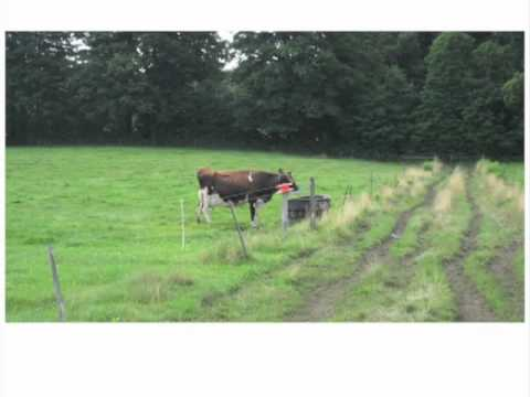 Setting up a Grazing System on Your Organic Dairy Farm