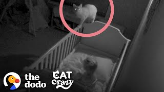 Rescue Cat Sneaks Into His Sister's Crib At Night | The Dodo Cat Crazy