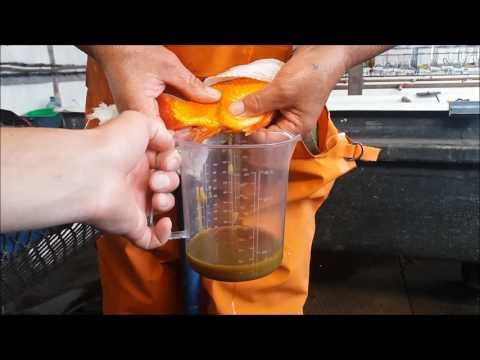 инкубация карпа рыбы видео выборе термобелья следует