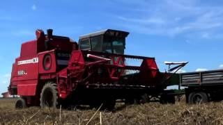 Żniwa 2017 ☆2x Massey Ferguson 530 & 3070 ☆ Harvest in Poland ㋡ HD
