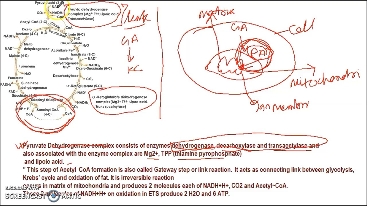Kreb cycle for NEET/AIIMS ENTRANCE EXAM