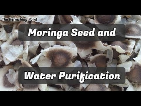Clean & Purify Water the Ancient Way -Seeds from the Moringa Tree are Inexpensive Water Purification