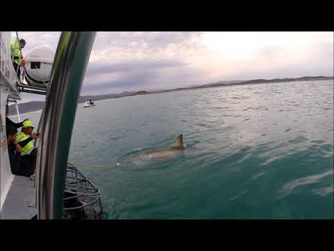Shark Cage Diving in Gansbaai, South Africa