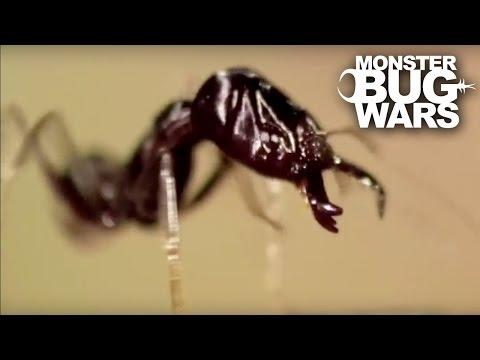 Antlion Vs Trap Jaw | MONSTER BUG WARS