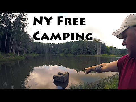 Isolated New York State Forest Camping