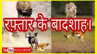 TOP 10 FASTEST ANIMALS IN WORLD | FASTEST RUNNER | दुनिया में सबसे तेज दौड़ने वाले दस जानवर।