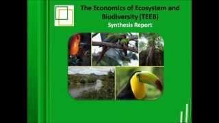 The Economics of Ecosystem and Biodiversity TEEB