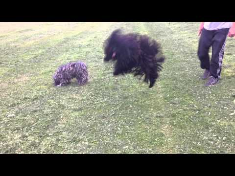 Grass stopper Hungarian Puli