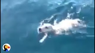 Puppy Rescued From MIDDLE OF THE SEA | The Dodo