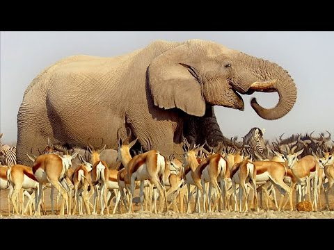 BBC Earth's Africa - premieres Tuesday, July 15th 9/8c on BB