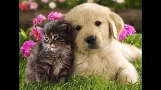 Исцеление домашних, бездомных животных Ангелами Крияваспата.Альмин