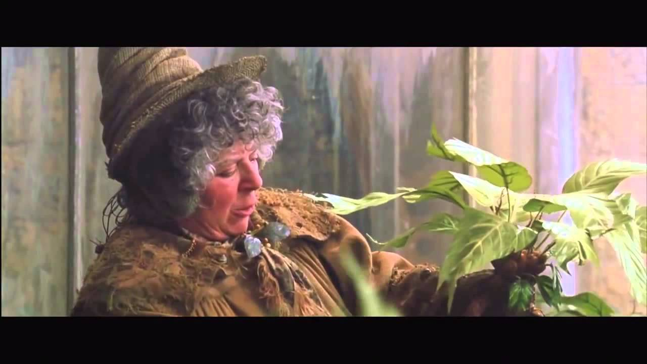 Mandrakes In Herbology Youtube