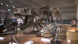 恐竜研究の今昔紹介【いばキラニュース】H31.4.17