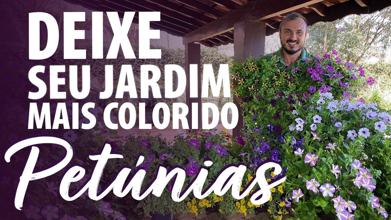 DEIXE SEU JARDIM MAIS COLORIDO - PETÚNIAS