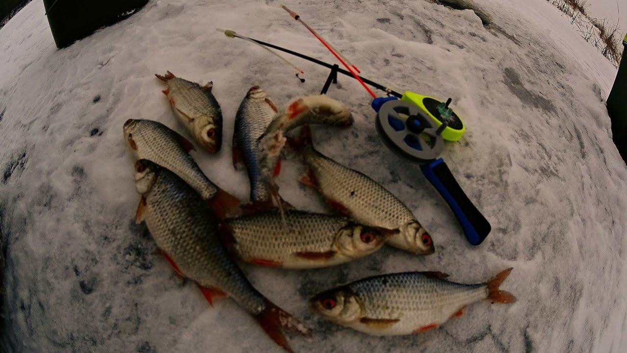 Рыбалка на окуня и плотву зимой