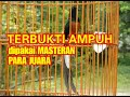 Murai Batu Isian Sogok Ontong Kolibri Cililin Lovebrid Masteran Yang Paling Banyak Di Juri  Mp3 - Mp4 Download