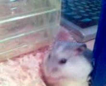 hamster blow job - YouTube