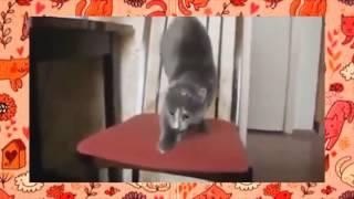 Смешные кошки Подборка видео, скачать приколы про животных