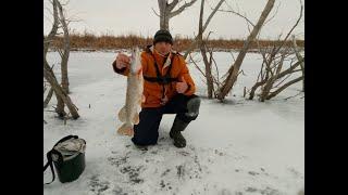 Зимняя рыбалка Очень редкая рыба Winter fishing Is a very rare fish