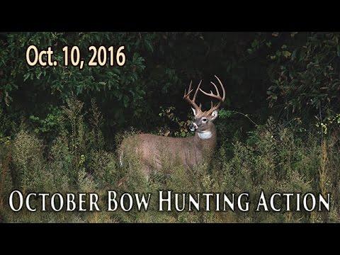 Midwest Whitetail | Big Public Land Bucks - October Buck Hunting