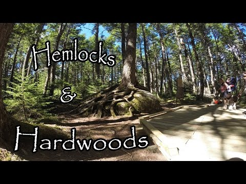 Hemlocks And Hardwoods Hiking Trail. Kejimkujik National Park, Nova Scotia.