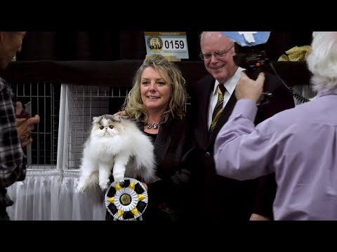 CFA International Cat Show 2017 - Best of the Best