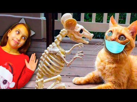 КОТЫ на КАРАНТИНЕ #2! СМЕШНЫЕ КОТЫ😻 и СОБАКИ🐶! ЧЕЛЛЕНДЖ НЕ ЗАСМЕЙСЯ Funny Cats Не смеяться Валеришка