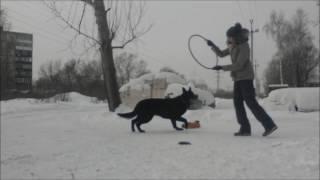 Восточно-европейская овчарка