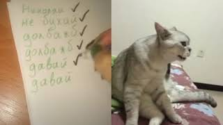 Кот поет песню